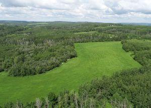 landscape-noperson-nature-grass