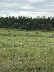 noperson-landscape-hay-agriculture