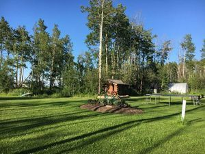 tree-grass-wood-landscape