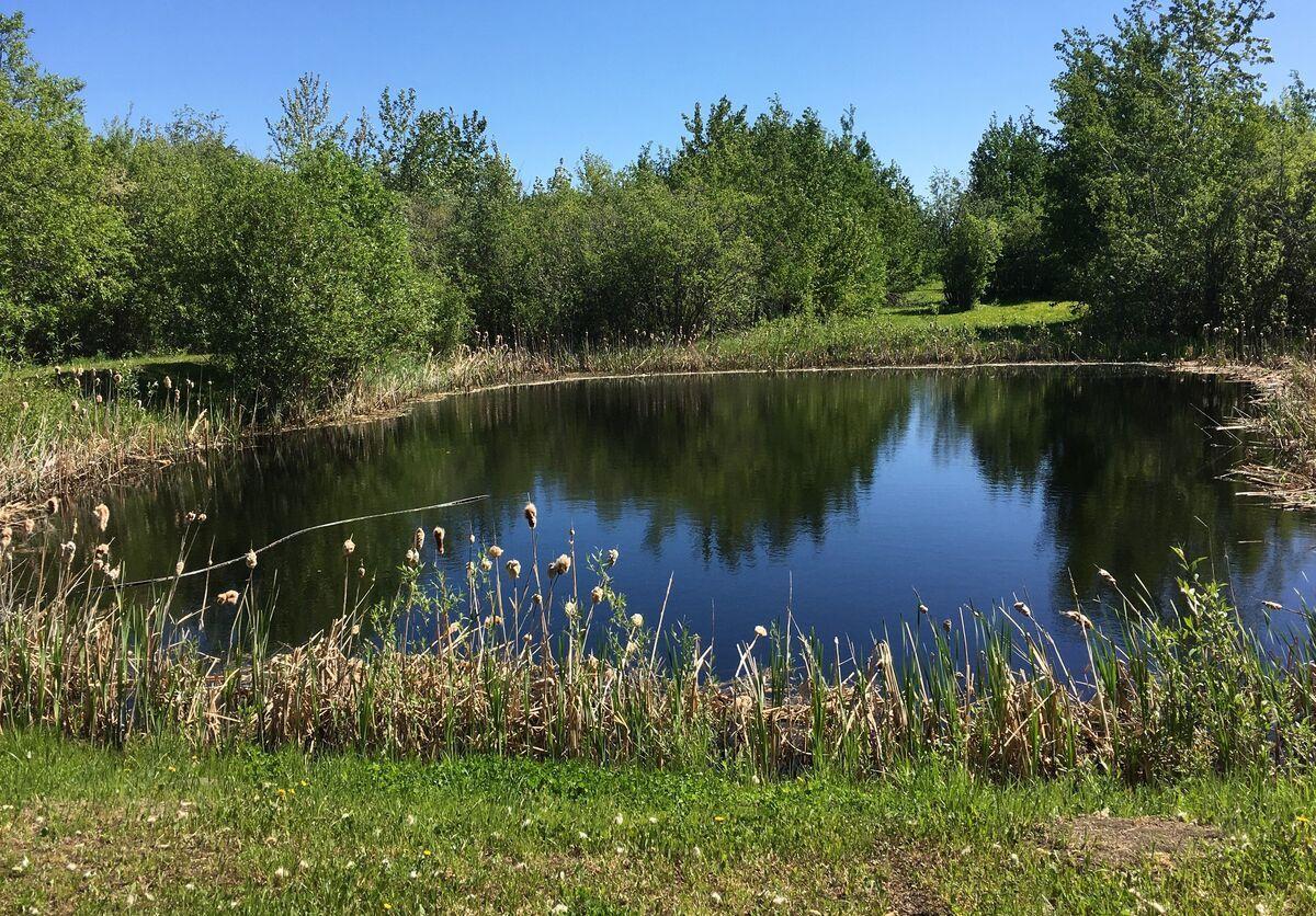 lake-water-nature-wood