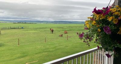 view of nature from rural dawson creek home